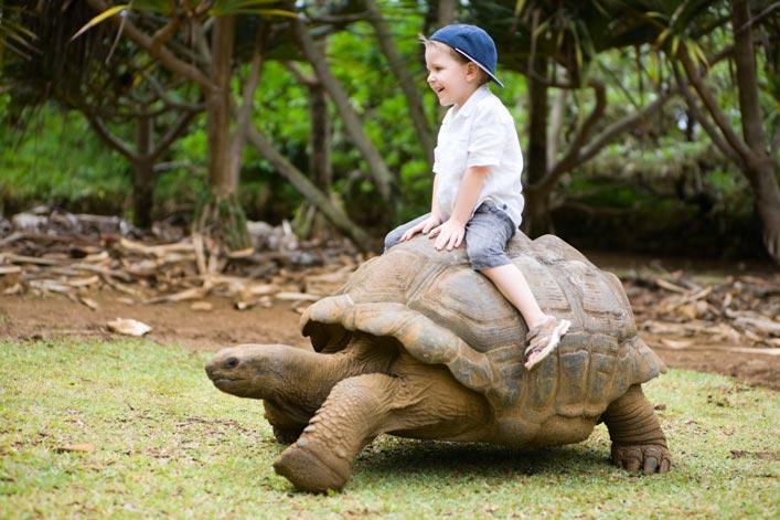 Enfant sur une tortue géante